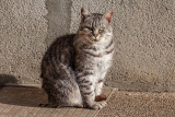 posing cat - mačka (_MG_8876m.jpg)