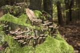 mushrooms (IMG_2753m.jpg)