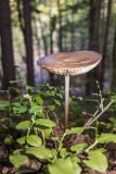 mushroom (IMG_2306m.jpg)