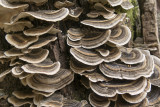 mushrooms (IMG_2339m.jpg)