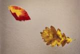 leaves (IMG_9448m.jpg)