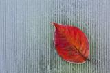 leave (IMG_9414m.jpg)