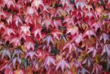 autumn leaves (IMG_3212m.jpg)