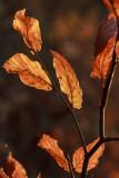 leaves (IMG_9600m.jpg)