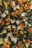 tulips (_MG_0222m.jpg)
