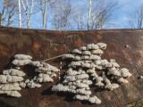 mushrooms (IMG_5378ok.jpg)