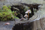 mushrooms (IMG_7829m.jpg)