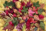 autumn bouquet (IMG_6797m.jpg)
