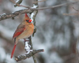 Today's Bird