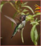 Hummingbird Flight.jpg