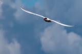 Tifft Birds-2.JPG