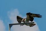 Tifft Birds-5.JPG