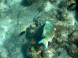 Snorkeling at Magaruque