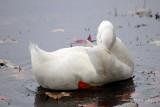 Lake Fowl in Autumn