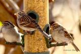 My Little Birds of Winter