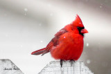 Come Little Red Bird, Sing Me a Song
