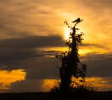 Sunset 6-4-16.jpg
