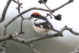 Birds in East Europe