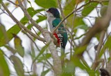 Birds and animals in Cuba