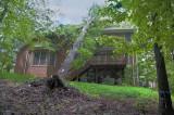 Fallen Oak Tree next door.