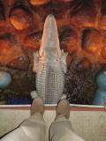 Hampi (India) Garden croc (2012)