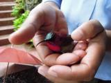 Caught a sunbird!