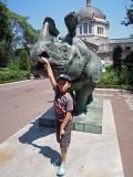 Bronx Zoo rhinos