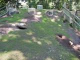Prairie dog exhibit at the Bronx Zoo