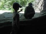 Gorilla.  (Wow!)