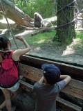 Copulating gorillas!