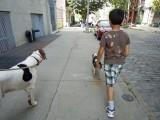 Dog walking in Dumbo