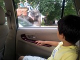 Elephant on the way to school