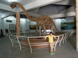 Kotasaurus Yamanpalliensis at the Birla Science Museum.  160,000,000 years old.  Excavated from Andhra Pradesh.