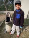 Alligator dust bin