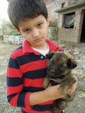 Rahil and Dogs