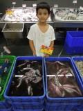 Java squid