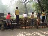 Crocodile spotters