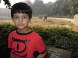 Zoo elephants