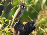Dehradun bird