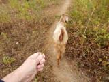 Walk a goat