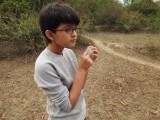 Cotton tree seed