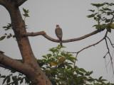 Distant bird of prey