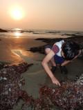 More Arabian Sea explorations