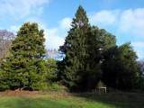 Cammo Pines