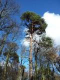 Ravelston Wood