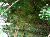 Stenhouse Outcrop