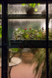 Looking into the greenhouse