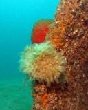 Monachelli Memorial Reef