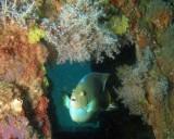 MB 90 Pat Mulligan Reef