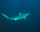MB59 Willie Krause Reef